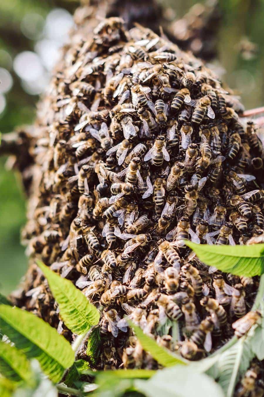 Faszination Honigbiene Krautkopf